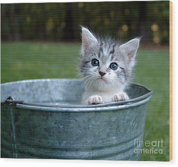 Kitty In A Bucket Wood Print by Jt PhotoDesign