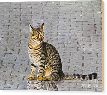 Kitty In Sevastopol Russia Wood Print by Phyllis Kaltenbach