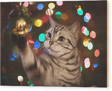 Kitty In The Lights Wood Print
