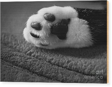 Kitty Paw Close Up Wood Print by Sharon Dominick