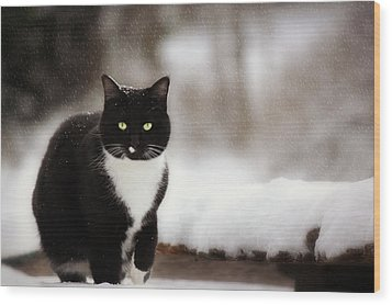 Kitty Snow Play Wood Print by Melanie Lankford Photography