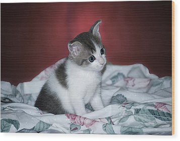 Kitty Taking A Moment To Chill Wood Print by Thomas Woolworth