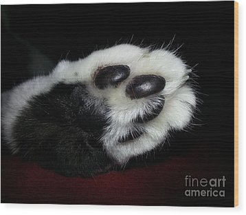 Kitty Toe Beans Wood Print by Heather L Wright