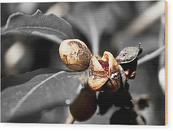 Wood Print featuring the photograph Knew Seeds Of Complentation by Miroslava Jurcik