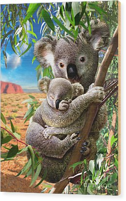 Koala And Cub Wood Print by Adrian Chesterman