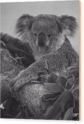 Koala Wood Print by Chris Flees
