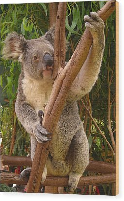 Koala  Wood Print by Laura Hiesinger