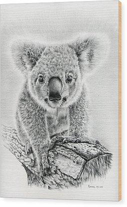 Koala Oxley Twinkles Wood Print