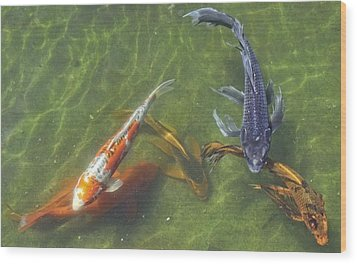 Koi Wood Print by Daniel Sheldon