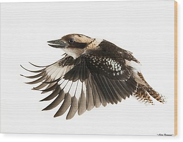 Wood Print featuring the photograph Kookabura In Flight by Avian Resources