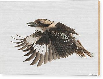 Kookabura In Flight Wood Print by Avian Resources