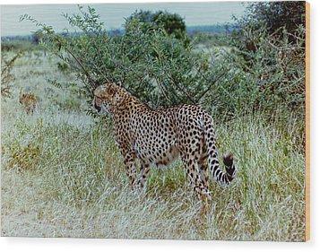 Krugger Cheetah Wood Print