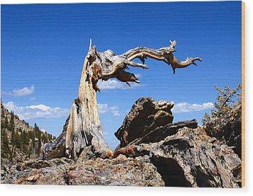 Krumholz At Timberline Wood Print
