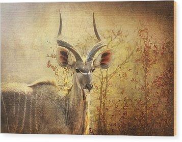 Kudo In The Wild Wood Print