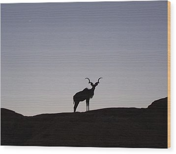 Kudu Silhouette At Nightfall Wood Print by Noreen HaCohen