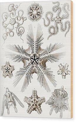 Kunstformen Der Natur Wood Print by Ernst Haeckel