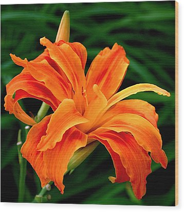 Kwanso Lily Wood Print by Rona Black
