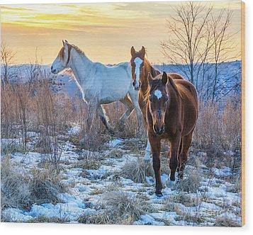Ky Wild Horses Wood Print by Anthony Heflin