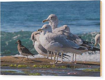 La Jolla Birds Wood Print