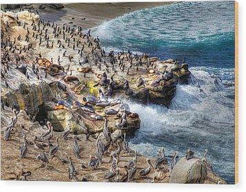 La Jolla Cove Wildlife Wood Print