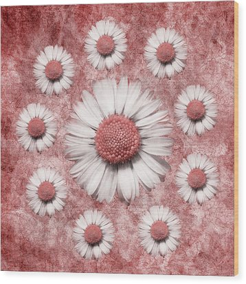 La Ronde Des Marguerites - Pink 02 Wood Print by Variance Collections