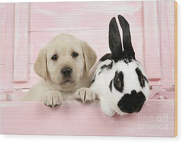 Lab Puppy And Bunny Wood Print by John Daniels