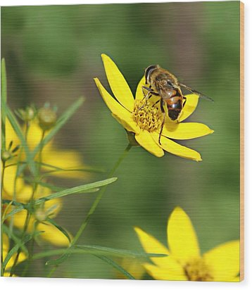 L'abeille Wood Print by Nikolyn McDonald