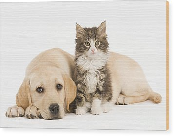 Labrador And Forest Cat Wood Print by Jean-Michel Labat