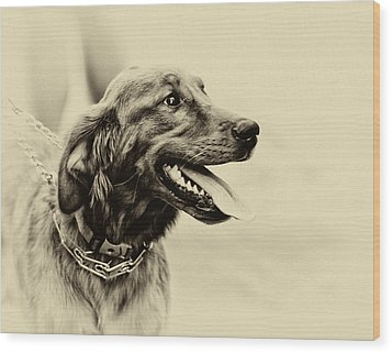 Wood Print featuring the photograph Labrador Retriever by Jerome Lynch