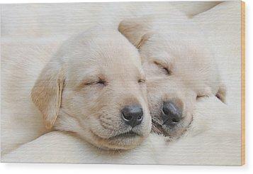 Labrador Retriever Puppies Sleeping  Wood Print by Jennie Marie Schell