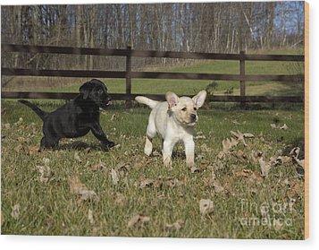 Labrador Retriever Pups Wood Print by Linda Freshwaters Arndt