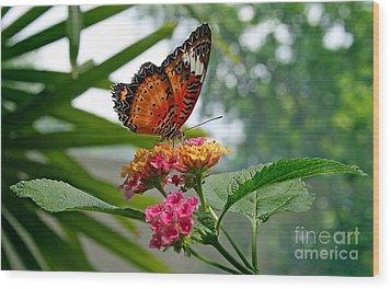 Lacewing Butterfly Wood Print by Karen Adams