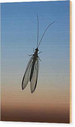 Lacewing Wood Print by Carl Engman
