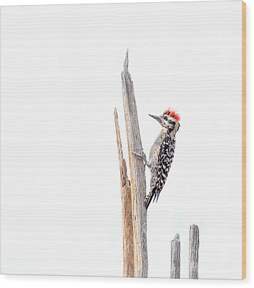 Ladder-backed Woodpecker Wood Print