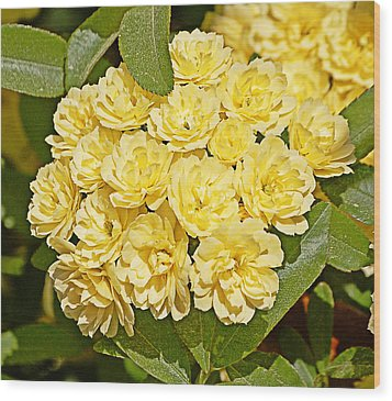 Wood Print featuring the photograph Lady Banks Roses by Linda Brown