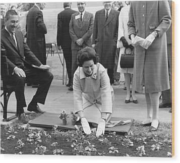 Lady Bird Johnson Planting Wood Print by Underwood Archives