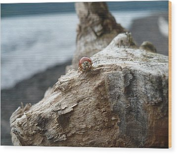 Lady Bug A Drift Wood Print by Nicki Bennett