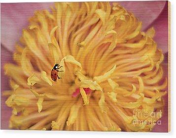 Lady Bug Wood Print by Darren Fisher