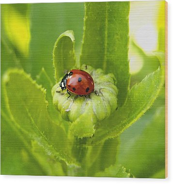 Lady Bug In The Garden Wood Print