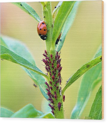 Lady Bug Keeping Watch Over Her Favorite Dinner Wood Print by Constantine Gregory