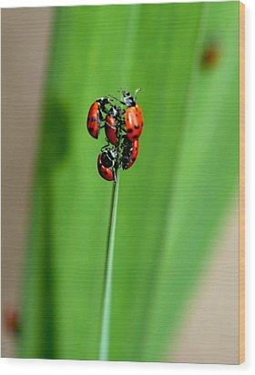 Lady Bug Social Wood Print