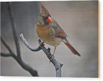 Lady Cardinal Wood Print by Skip Willits