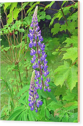 Lady Lupine Wood Print