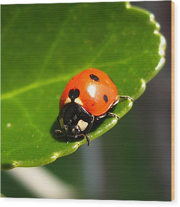 Ladybird Wood Print by Eva Csilla Horvath