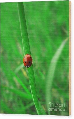 Ladybird Wood Print by Jelena Jovanovic