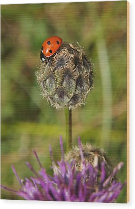 Wood Print featuring the digital art Ladybird by Ron Harpham