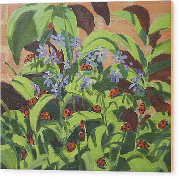 Ladybirds Wood Print by Andrew Macara