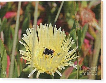 Ladybug And A Bumblebee Wood Print