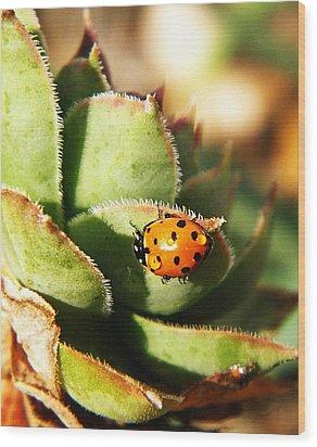 Ladybug And Chick Wood Print by Chris Berry