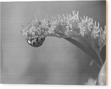 Ladybug And Goldenrod Wood Print